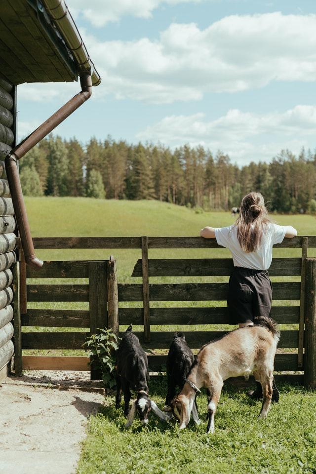 beneficios de las mascotas para los niños